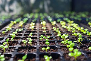 Nagoya protocol: Seed companies need to act now